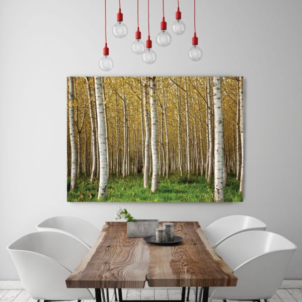 Silver Birch Forest Canvas