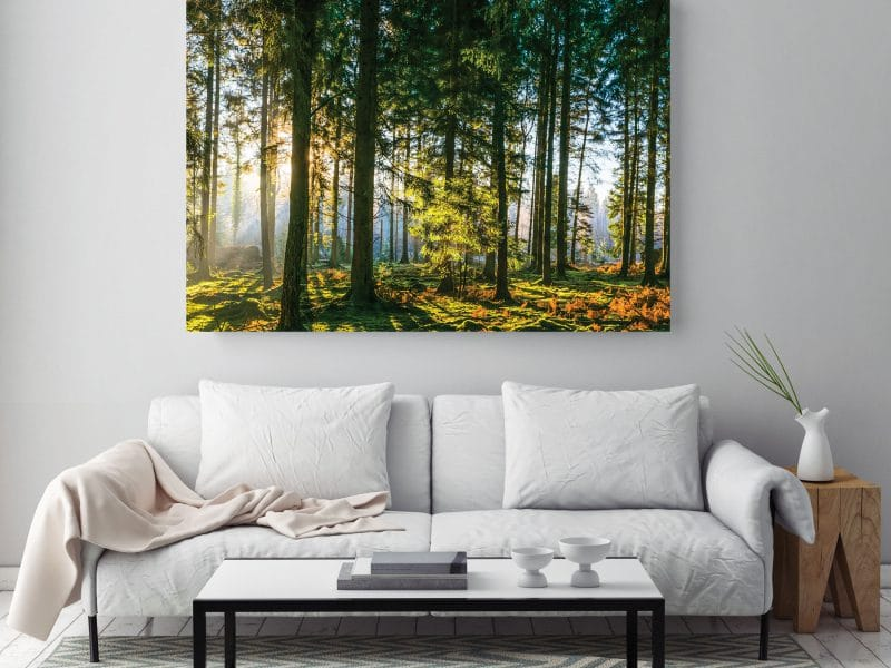 Sunrise_Forest_Canvas